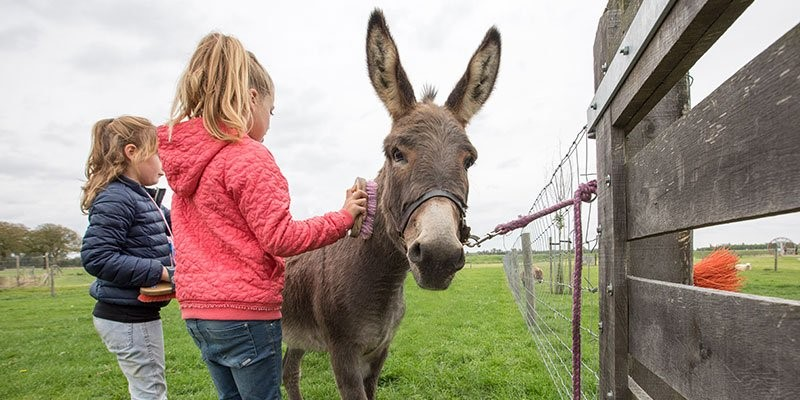 nollebos-westduinpark-van-woelderen-park-kinderboerderij-ezel